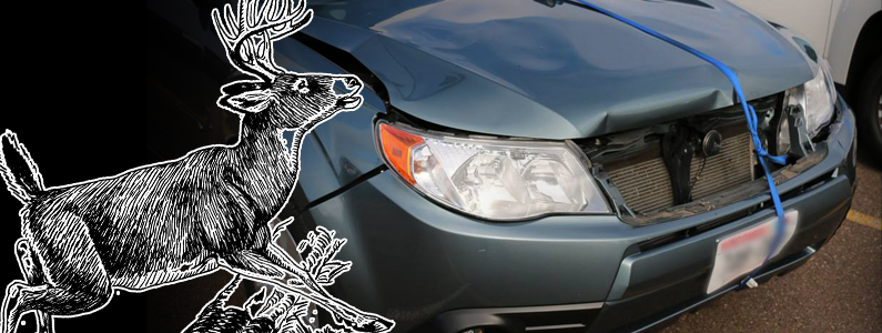Deer Hit? What to Do After Deer Accident | Eau Claire Area